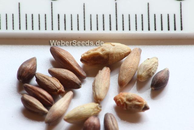 Taxonomy - Ephedraceae (FAMILY) - uniprot.org